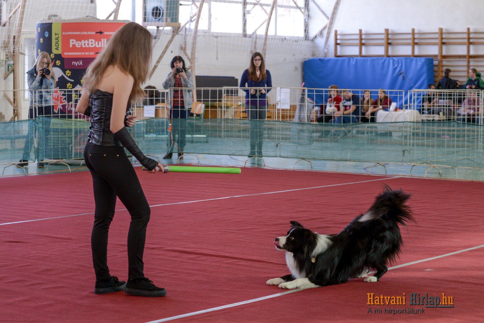 dog_dancing_20